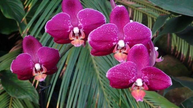 veranstaltungstipps f r februar und m rz orchideenfans blog. Black Bedroom Furniture Sets. Home Design Ideas