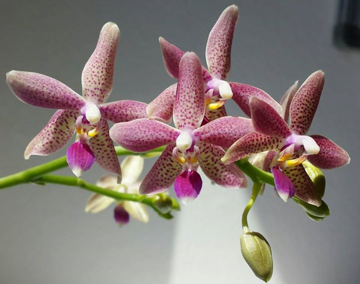 barbara meier er ffnet die orchideen fotoausstellung zeig. Black Bedroom Furniture Sets. Home Design Ideas