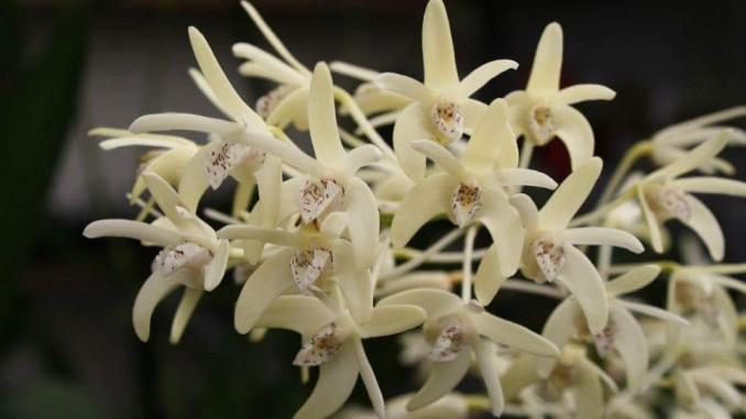 Orchideen Kopf kopf orchideen orchideenfans