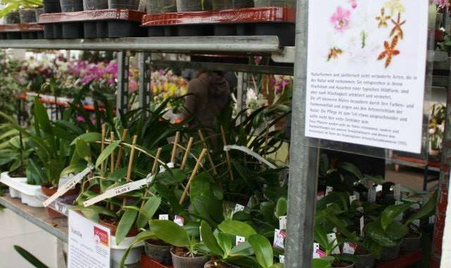 orchideenausstellung im palmengarten frankfurt vom 10 19 m rz 2017 orchideenfans blog. Black Bedroom Furniture Sets. Home Design Ideas