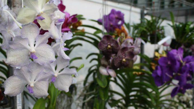 Es Ist Heiss Vier Last Minute Tipps Zur Orchideenpflege