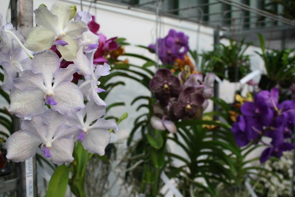 es wird hei vier last minute tipps zur orchideenpflege orchideenfans blog. Black Bedroom Furniture Sets. Home Design Ideas