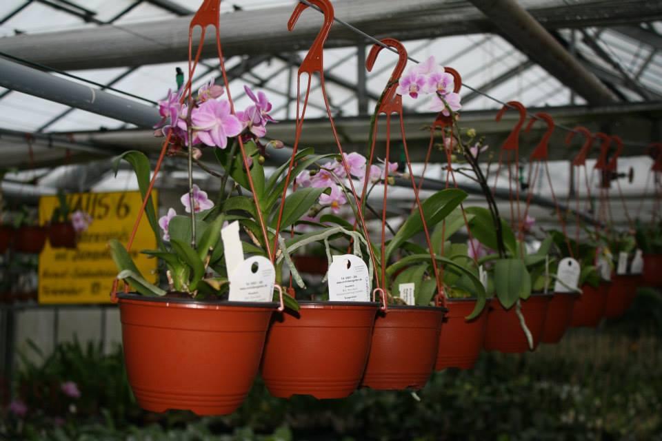 Orchideenhändler