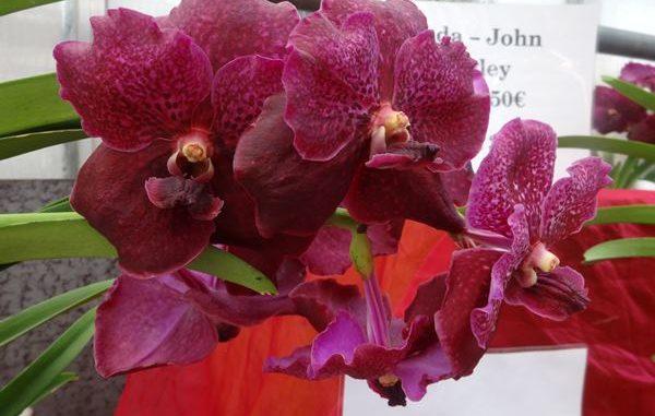 orchideen veranstaltungen im mai 2017 orchideenfans blog. Black Bedroom Furniture Sets. Home Design Ideas