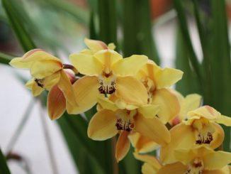 orchideen wichmann archive orchideenfans blog. Black Bedroom Furniture Sets. Home Design Ideas