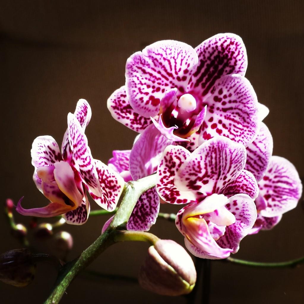 orchideen die 5 h ufigsten fragen und antworten. Black Bedroom Furniture Sets. Home Design Ideas