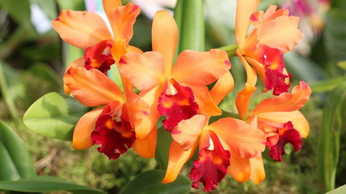Orchideen Schneiden So Geht Es Richtig Orchideenfans Blog