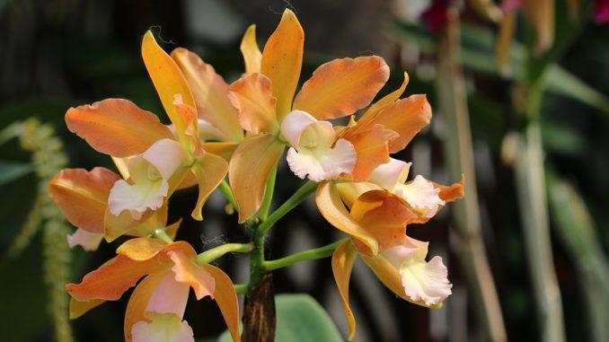 orchideen sammelbestellung brasilien 2017 bei elsner orchideen orchideenfans blog. Black Bedroom Furniture Sets. Home Design Ideas