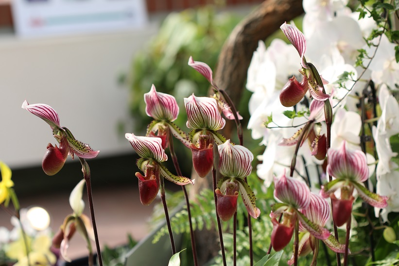 10 rabatt auf alles in der orchideenoase berlin gutscheincode im beitrag orchideenfans blog. Black Bedroom Furniture Sets. Home Design Ideas