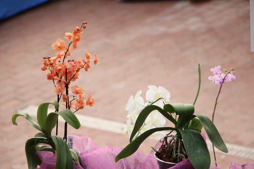 orchideenausstellung im botanischen garten rombergpark dortmund orchideenfans blog. Black Bedroom Furniture Sets. Home Design Ideas