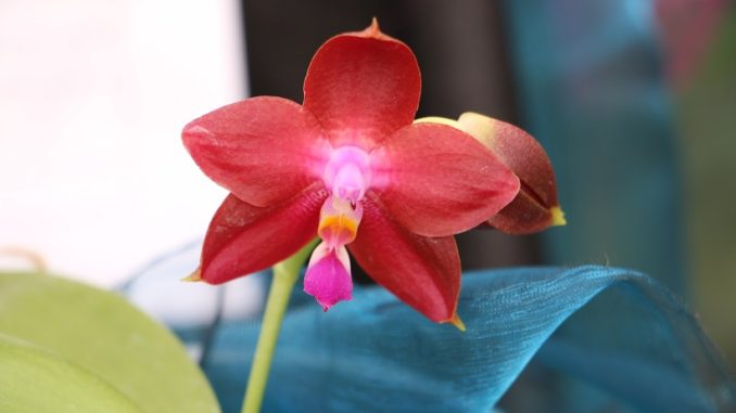Fünf Erste Hilfe Sofortmaßnahmen Für Orchideen Orchideenfans Blog