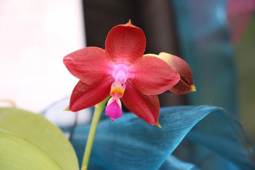 f nf erste hilfe sofortma nahmen f r orchideen orchideenfans blog. Black Bedroom Furniture Sets. Home Design Ideas