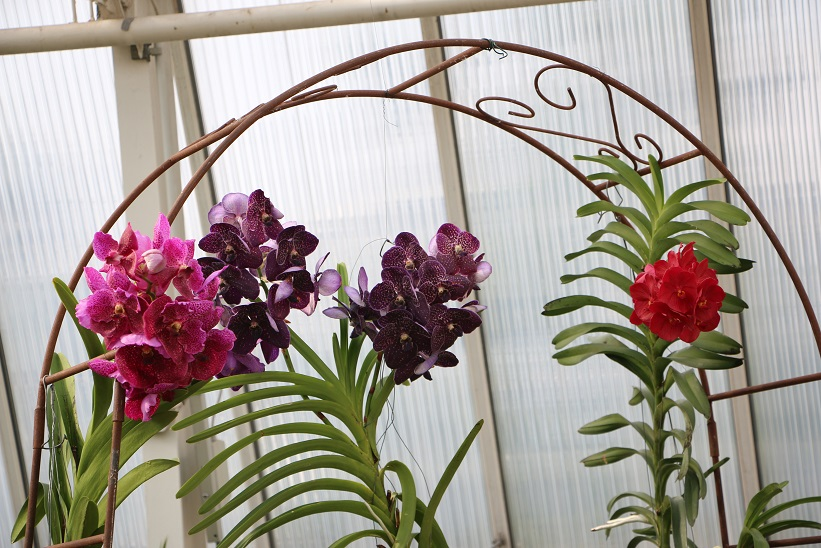 6 tipps gegen bl hfaule orchideen orchideenfans blog. Black Bedroom Furniture Sets. Home Design Ideas
