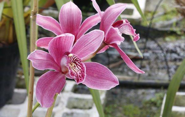 orchideen gie en tipps tricks orchideenfans blog. Black Bedroom Furniture Sets. Home Design Ideas