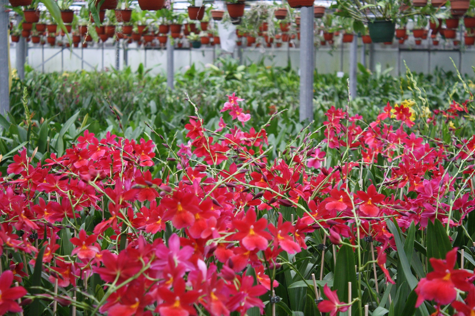 der orchideengarten in dahlenburg immer eine reise wert orchideenfans blog. Black Bedroom Furniture Sets. Home Design Ideas