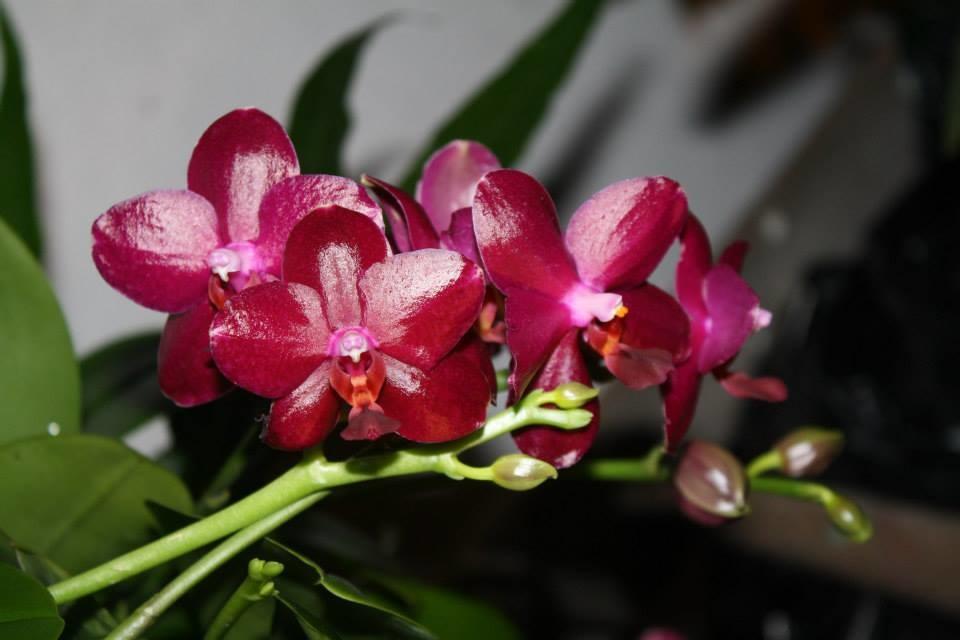 neue ware bei orchideen seidel orchideenfans blog. Black Bedroom Furniture Sets. Home Design Ideas