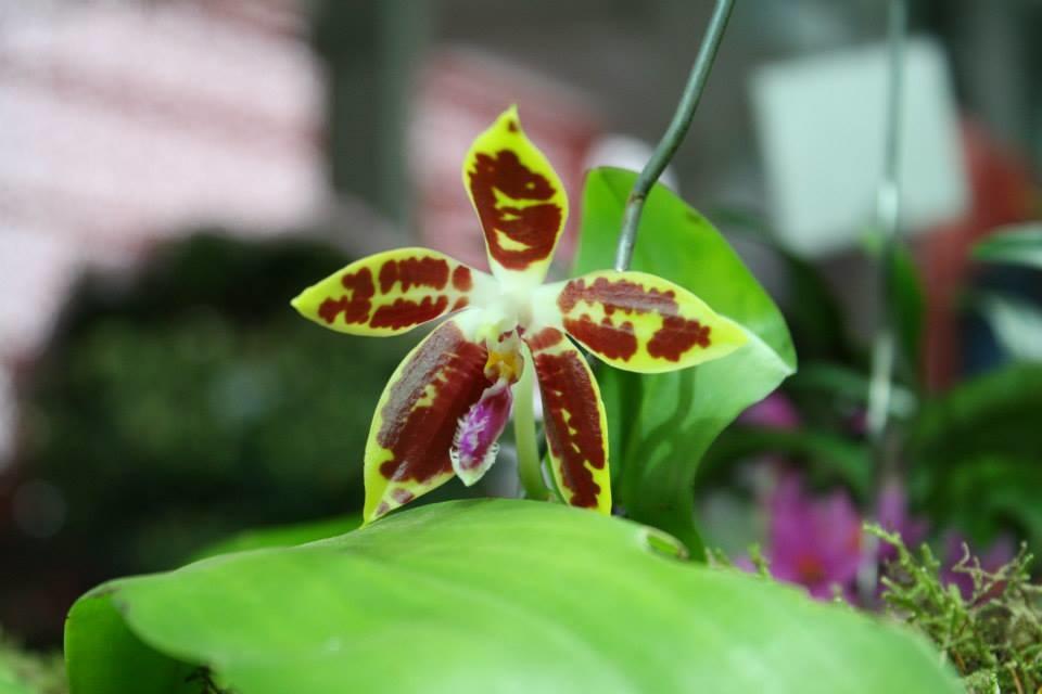 Orchideen wieder zum Blühen bringen