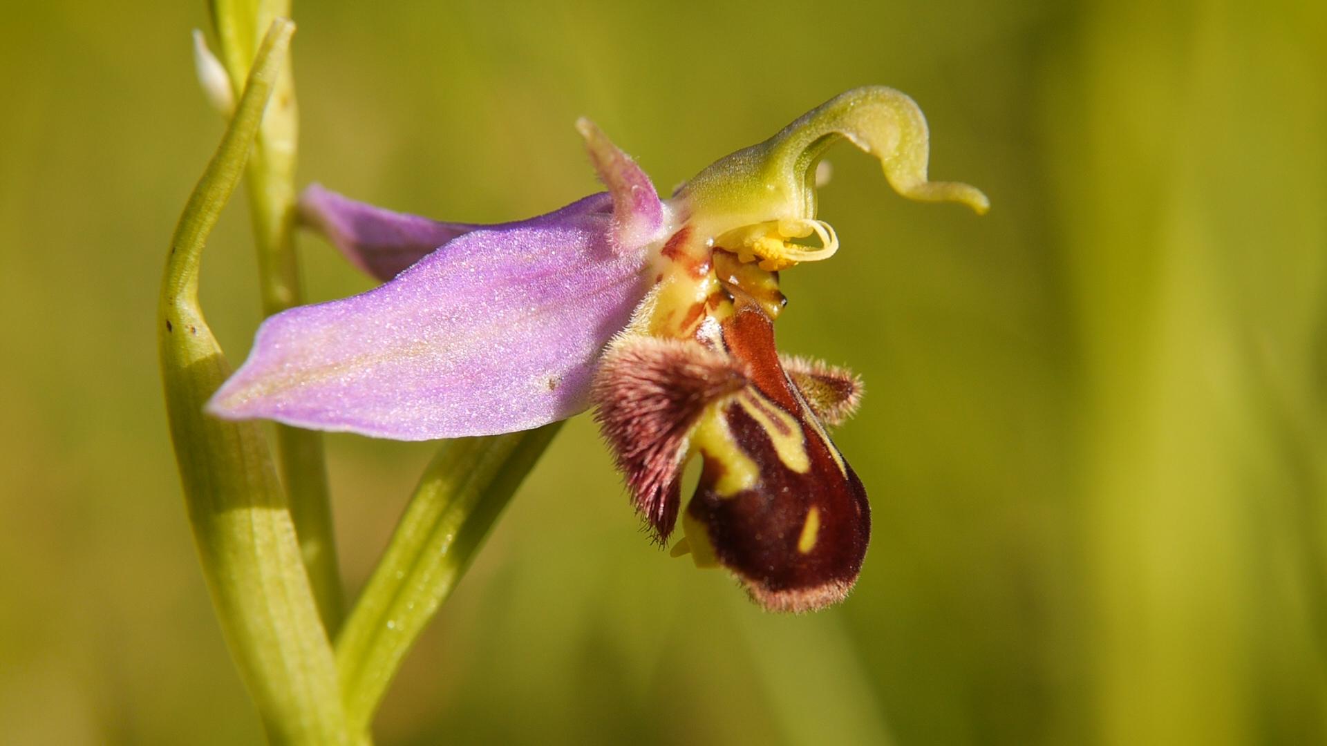 filmtipp verborgene sch nheit die orchideen des saaletals orchideenfans blog. Black Bedroom Furniture Sets. Home Design Ideas