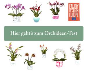 orchideen umtopfen eine schritt f r schritt anleitung. Black Bedroom Furniture Sets. Home Design Ideas